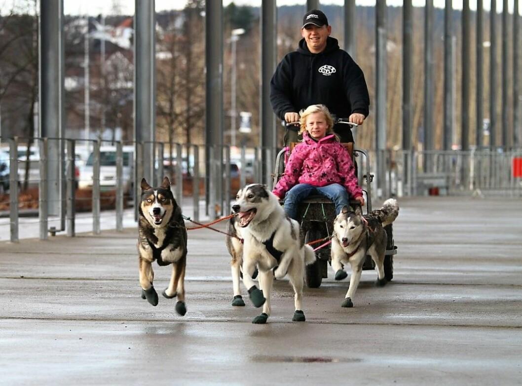 I tillegg til oppvisninger, show og opplevelser med hund, kan du møte opp mot 10 000 firbeinte og over 300 hunderaser på Dogs4All.