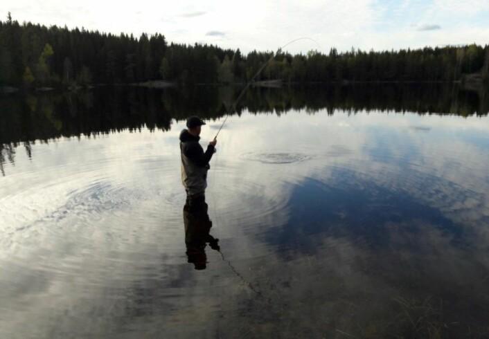 Erfarne markafiskere bruker gjerne natta for å fiske ørret om sommeren.