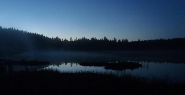 Når mørket senker seg over skogen, får du en ny naturopplevelse.