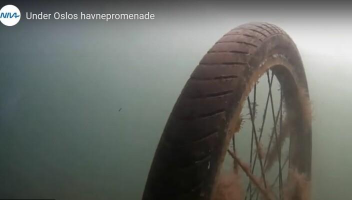 I sjøen er sykler søppel. Det vi kaster i sjøen blir ikke borte