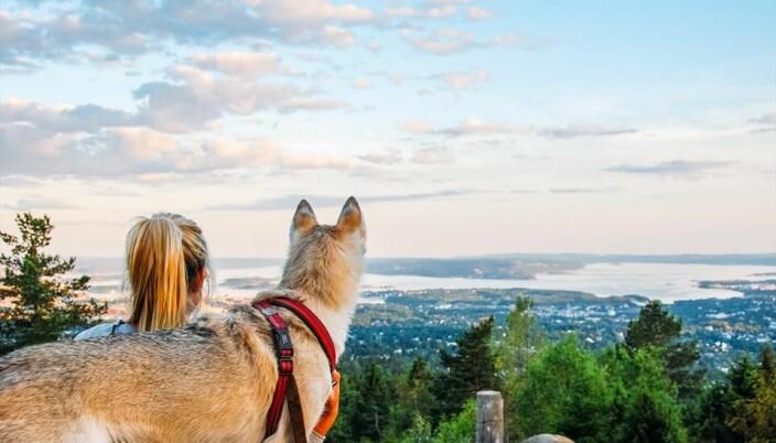 Utsikten fra Vettakollen