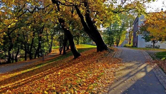 Ved Akerselva om høsten