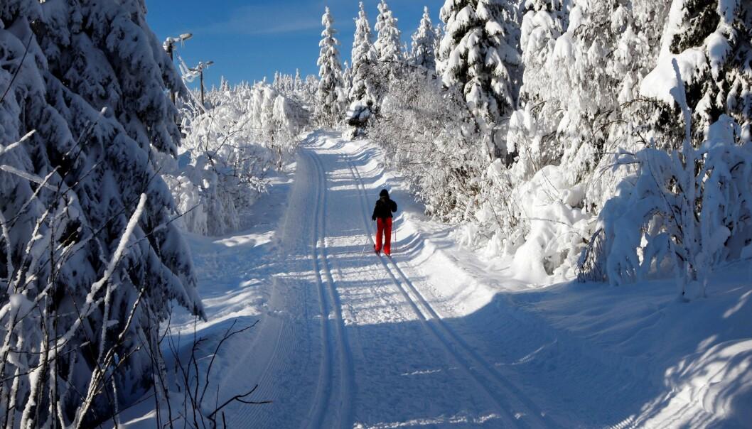 Skiløypene i Marka blir preparert av Skiforeningen. — Støtten fra medlemmene blir kjempeviktig også fremover, sier generalsekretær Erik Eide.