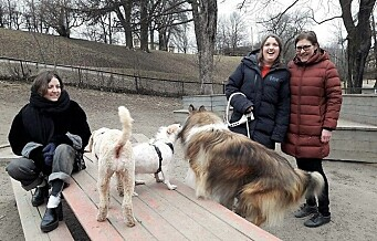 Hundeeiere klager til Fylkesmannen på vedtak om stenging av hundeparken i Stensparken