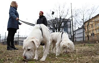 Naboene er helt uenige i at det anlegges en hundepark på Galgeberg