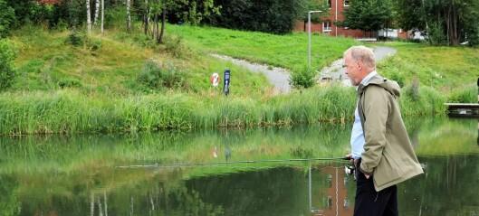 Rapport om vannkvaliteten i Hovinbekken friskmelder verken vannet eller fisken