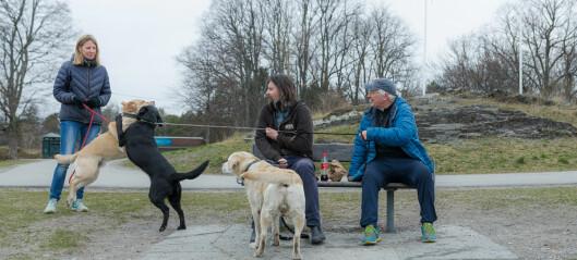 Tidligere har politiet bøtelagt hundeeiere med løse hunder på Bygdøy. På lørdag var det ikke en løs hund å se