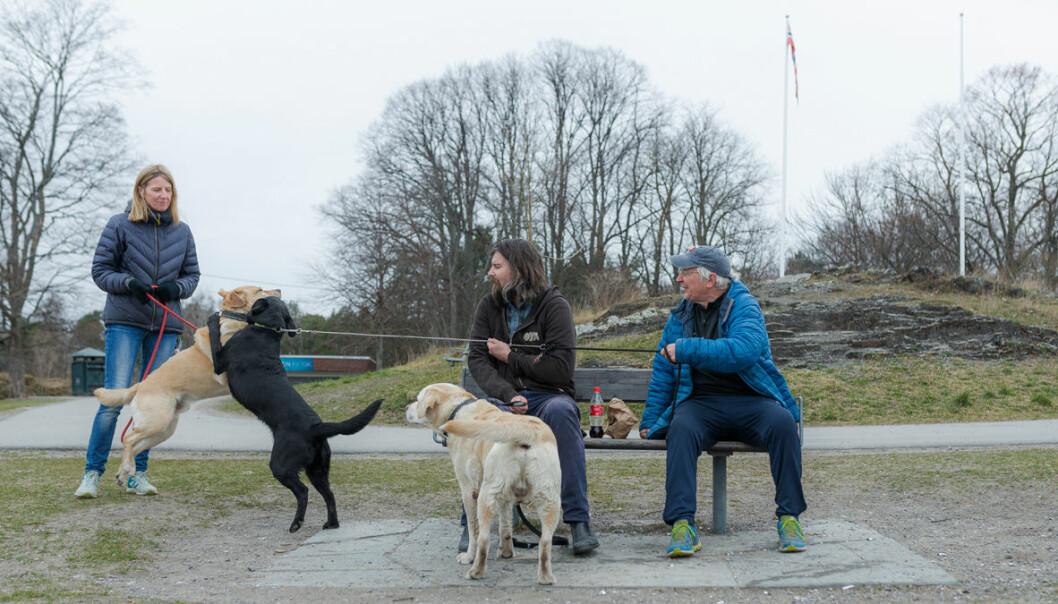 Båndtvang og ønske om å ha kontroll på hundene gjorde at de aller fleste hunder var i bånd på Bygdøy