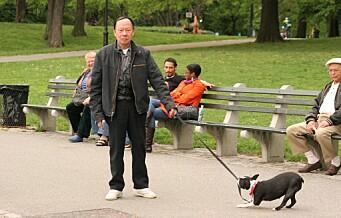 Torshovdalen kan få nytt lufteområde for hunder
