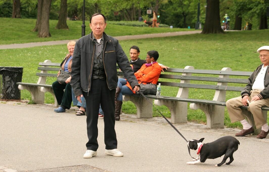 I framtiden kan beboerne i bydel Sagene muligens få en hundeluftegård i Torshovdalen.