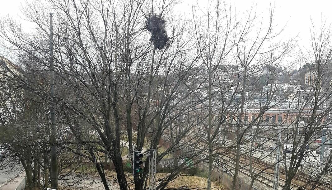 Her er utsikten fra vinduet til skribenten ned til hundeparken.