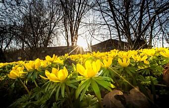 Fortsatt koronastengte porter mens det er vårblomstring i Botanisk hage