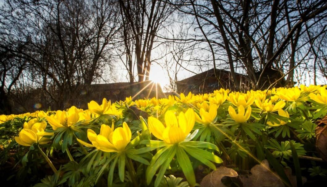 — Vi er pålagt av Kunnskapsdepartementet å holde Botanisk hage på Tøyen stengt, sier universitetsrektor Svein Stølen.