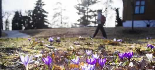 – Botanisk hage er et sårt tiltrengt pusterom på østkanten