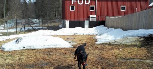 Foreningen for omplassering av dyr frykter et rush av kjæledyr når det blir hverdag etter korona