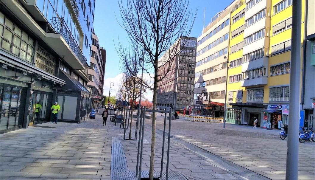 Kommunen felte de gamle trærne i fjor høst da Olav Vs gate skulle gjøres om til såkalt miljøgate. Nå er nye trær på plass.