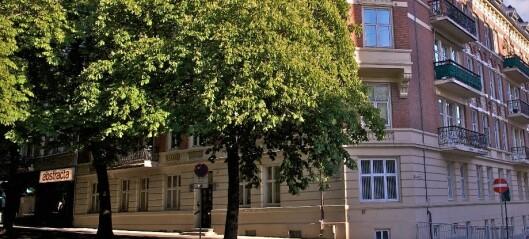 Nå starter planting av nye kastanjetrær i Bygdøy allé. 75 av de opprinnelige trærne er døde