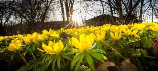Botanisk hage er åpen igjen. Tre uker etter løftet om delvis gjenåpning