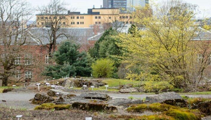 Fjellhagen våren 2017. Nå kan Oslos befolkning oppleve siste rest av våren i Botanisk hage.