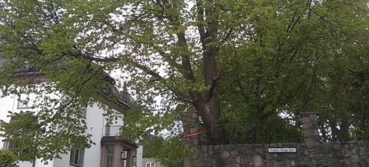Frognerpolitikere sier nei til å la Petter Stordalen og Rema-arving hugge ned et tre i Frederik Stangs gate