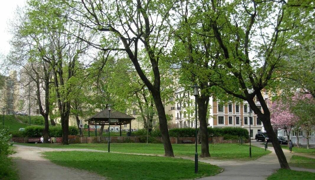 12,5 millioner kroner settes av til oppgradering av Kristparken. Her er parken sett fra Møllergata.