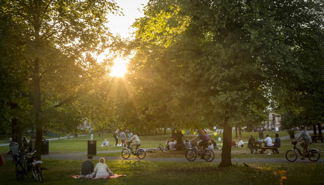 Solnedgang over parkgjester, syklister og trær i Sofienbergparken.