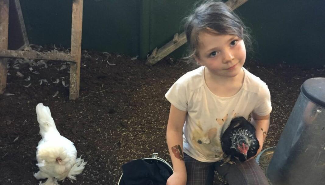 Tusenvis av barn i Oslo har siden 1950-tallet matet og opplevd husdyr på nært hold. Nå er det trolig slutt for besøksgården på Ekeberg.