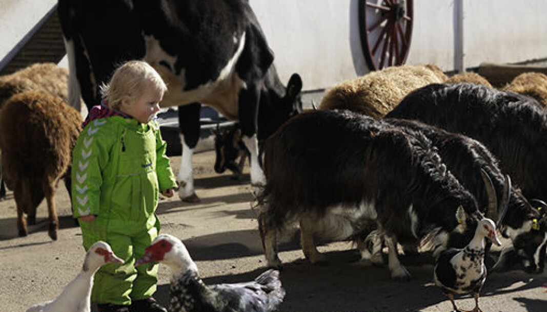 I over 60 år har byunger fått oppleve norske husdyr på nært hold ved besøksgården på Ekeberg.