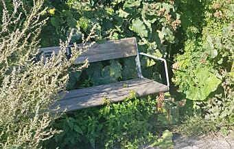 Benkene og buskene i Frognerkilen forfaller. —Utfordrende å rydde forskjellige buskarter, svarer bymiljøetaten.