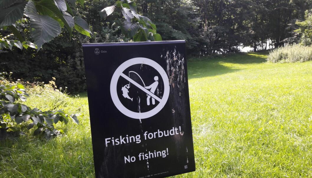 Her står det hvitt på svart. Fisking forbudt. Det gjelder Frognerparken.