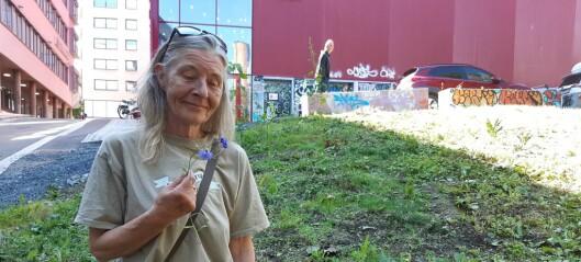Hundrevis av nytteplanter og mat for biene meiet ned av byfornyelsesetaten