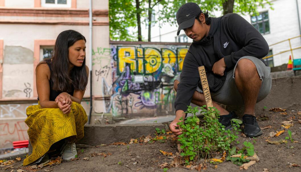 Saad Moazzem har lært hvordan man får en mynteplante til å trives. Her deler han kunnskap med byråd for miljø og samferdsel, Lan Marie Nguyen Berg (MDG)