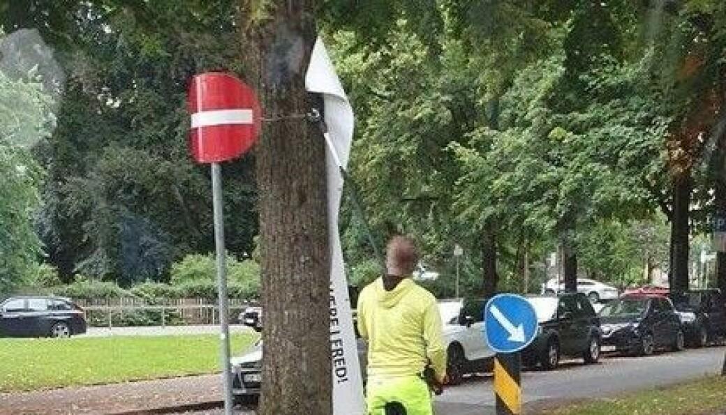 En ansatt i Hadeland Maskinservice tar ned banner fra trær i Gyldensløves gate.
