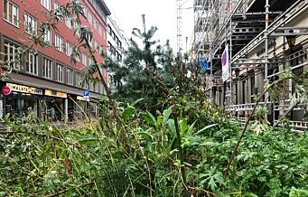 – Fra de rustne jernkassene i Nedre Slottsgate velter et villniss av ugress. Dette er vanskjøtsel av kommunale midler