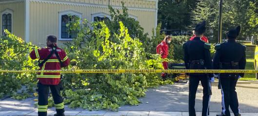 Trær veltet over person i Frognerbekkdalen og Slottsparken på grunn av sterk vind