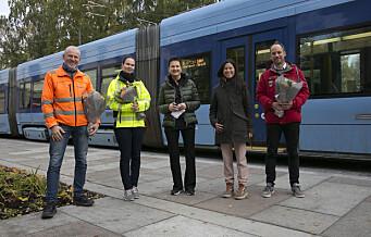 Nye Thorvald Meyers gate gjenåpnes endelig