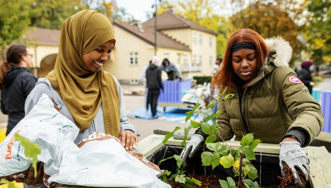 Sumaya Ali Isse og Sadia Mubiru planter friske grønne planter i nye plantekasser til sin egen skolegård.