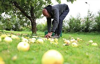Frelsesarmeens Jobben fortsetter å gå på epleslang i Oslos hager