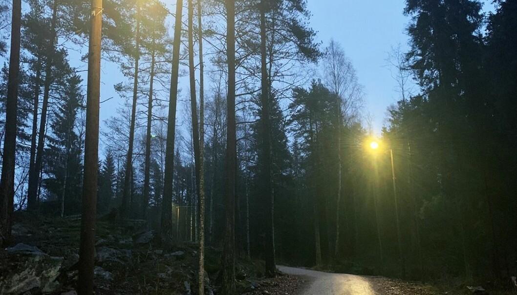Den nye lysløypen knytter seg til eksisterende lysløyper i Nordmarka og vil lyse hele året.