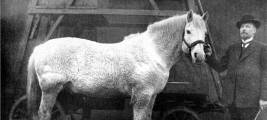 Dyrene som ga alt for å bygge byen, har også en plass i Oslos historie