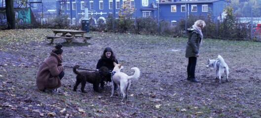 Lydene fra den nye hundeparken på Galgeberg forsvinner i støyen fra trafikken: — Det ikke hundene som lager alt bråket, sier naboene