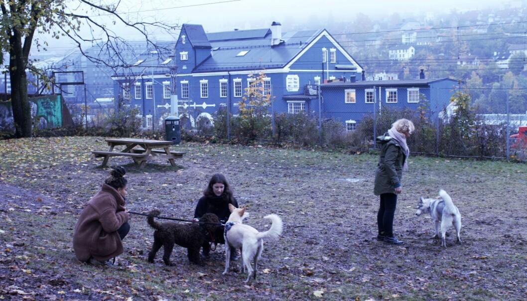 Hanne Hovda (til venstre) og Mina Wilson (til høyre) er naboer til hundeparken på Galgeberg.