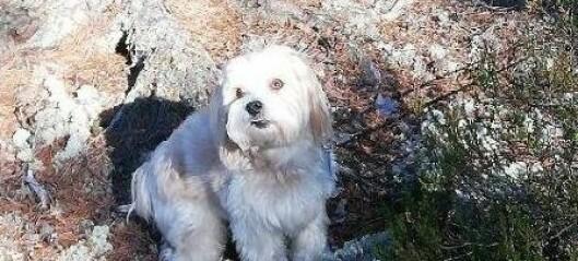 Stjålet hund fra Sæterkrysset er kommet til rette: - Godt politiarbeid og gode vitner førte til oppklaring