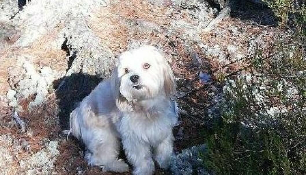 Den lille hunden sto bundet utenfor bakeriet i Sæterkrysset da noen stjal den.