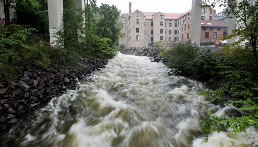 Norges vassdrags- og energidirektorat har sendt ut flomvarsel fra fredag.
