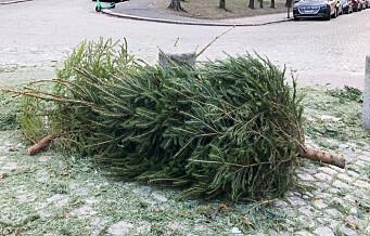 Bor du innenfor Ring 2 og rakk ikke fristen for å legge juletreet til gjenvinning? Fortvil ikke