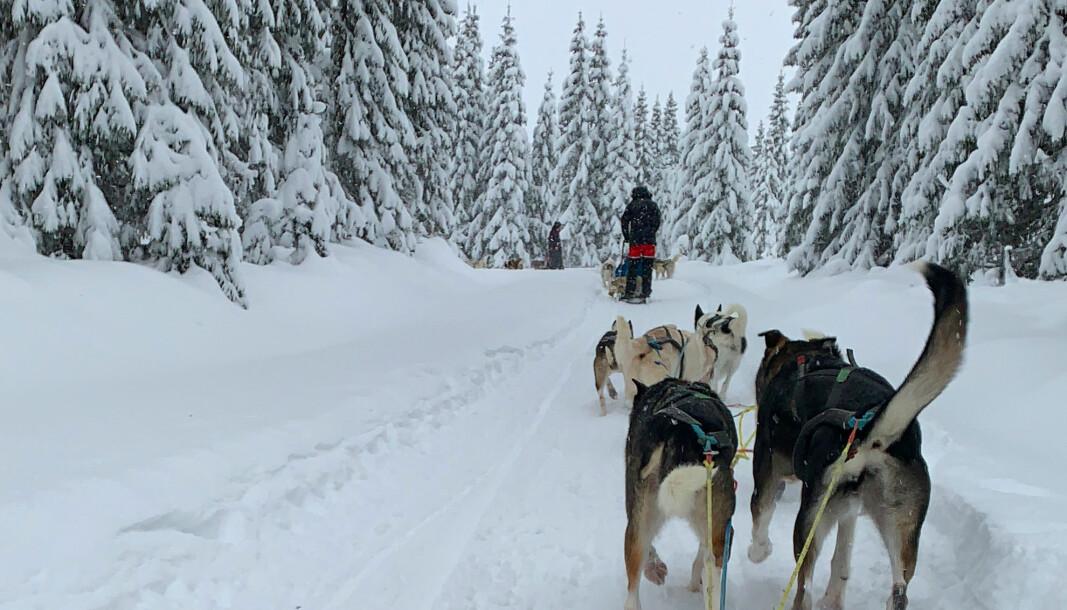I fjor vinter var hundelsedeturer et av aktivitetstilbudene til folk i aktiv rus i prosjektet «Tett på» som drives fra Fyrlyset i Urtegata.