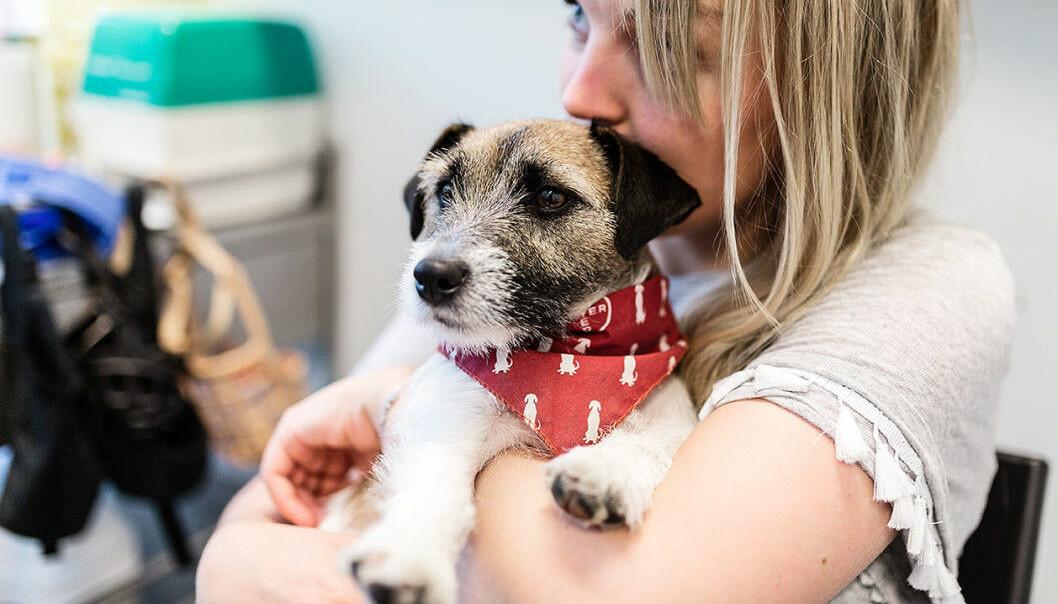 Rottegiften tok nesten livet av lille Pippi i 2017, men veterinærene klarte å redde henne. Her er Pippi med eier Julia Ansnes