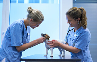 - Mange tenker ikke over det store ansvaret de påtar seg når de skaffer seg dyr, mener veterinær Sasja Rygg