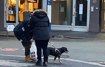 Dette paret kan ha stjålet Kira. Den ni år gamle blandingshunden ble sist sett på Jernbanetorget